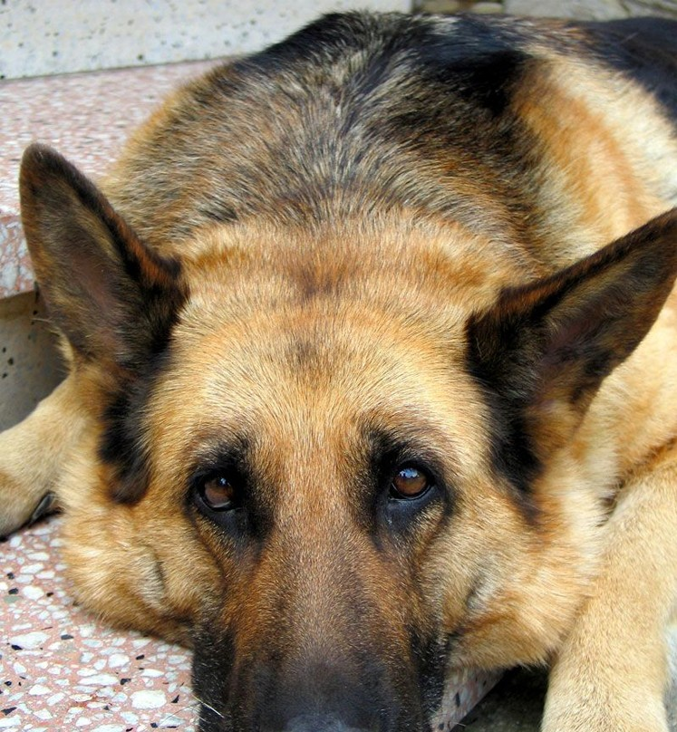 All Natural Treatment For Arthritis In Dogs